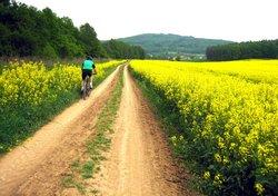 Z tohoto řepkového pole měli alergici strach, žádného kolabujícího jsem ale nepotkal.